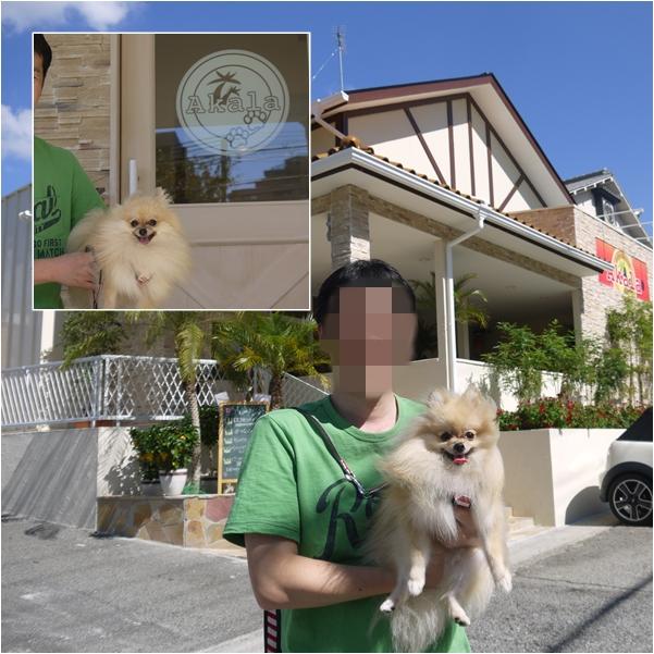cats1_20131008170500768.jpg