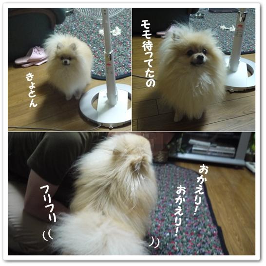cats5_20130718223832.jpg