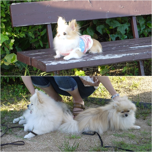 cats7_20130921231155855.jpg