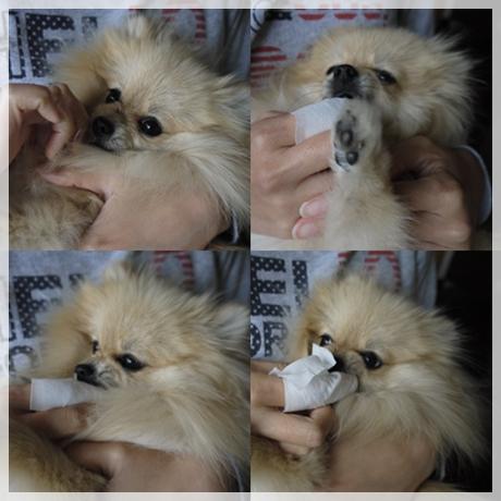 cats_20130517224314.jpg