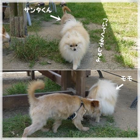 cats_20130528185034.jpg