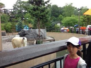 旭山動物園 さおりとしろくま