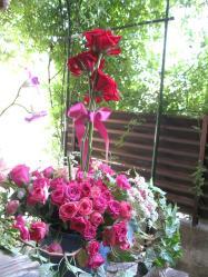 翌日の薔薇トピアリー1