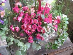 翌日の薔薇トピアリー2