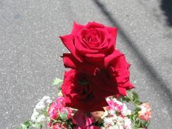 翌日の薔薇トピアリー7