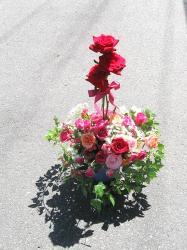 翌日の薔薇トピアリー8