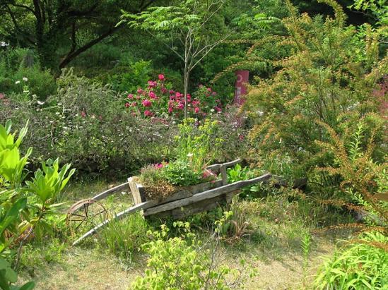 ターシャの庭3