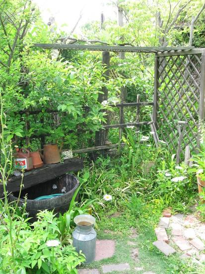 ターシャの庭9