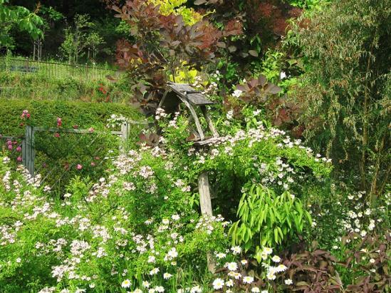 ターシャの庭11
