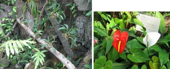 花の地球館4