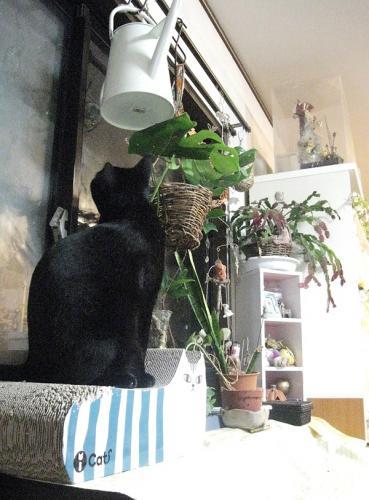 花台の片付け12