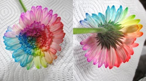 着色実験6