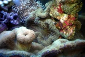 カリブ海水魚 035