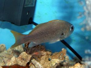 カリブ海水魚 028