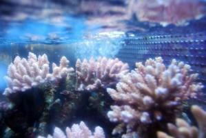カリブ海水魚 031