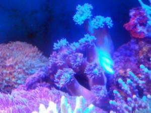 カリブ海水魚 036