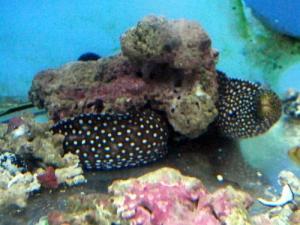 カリブ海水魚 027