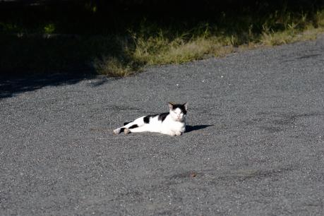 cat_07.jpg