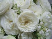 光と愛の感謝日記 花を贈ろう!(癒しと浄化の白い薔薇)