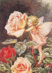 光と愛の感謝日記 ある日のバラの妖精ちゃん