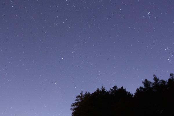 木 夜空600