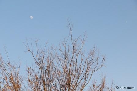⑭真昼の月mini