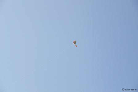 ⑯凧あげmini