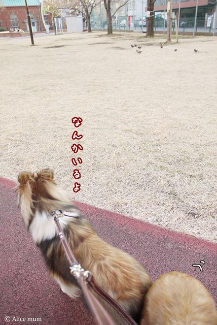 ⑫いつもの芝生公園にedit mini