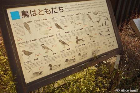 ④鳥はともだちmini