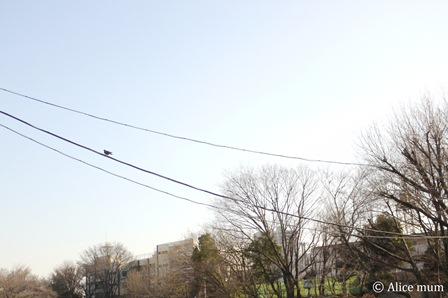⑤鳥はともだち2mini