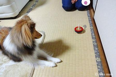 ⑨駒mini