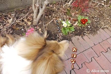 ④お花が咲いているよ