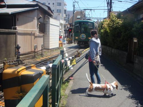 江ノ電とアリス1