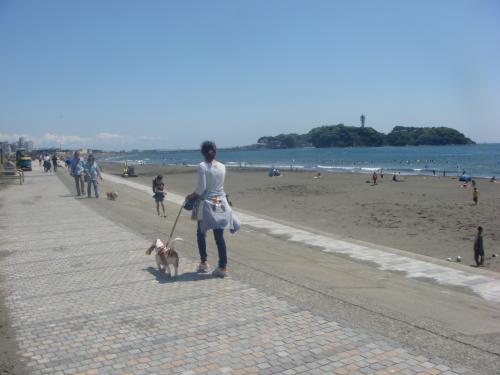 江の島が見えてきた