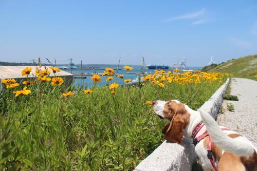 浜名湖療養旅13