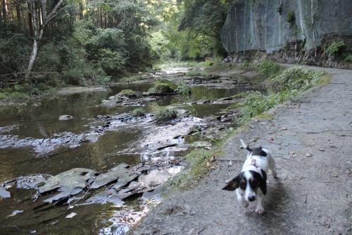 粟又の滝6
