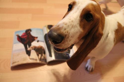 モデル犬4