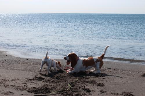 長浜海岸4