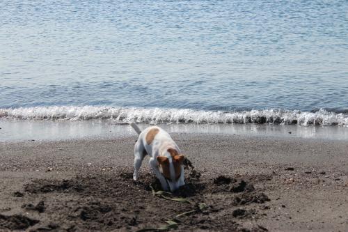 長浜海岸5