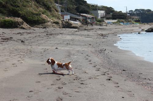 長浜海岸10