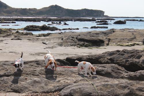 長浜海岸19