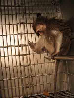 monkey_20130422150823.jpg