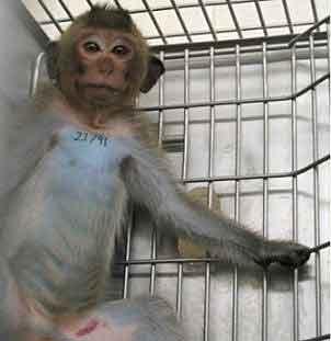 monkey_20130507002458.jpg