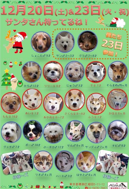 ALMA ティアハイム 12月20日&23日 参加犬猫一覧