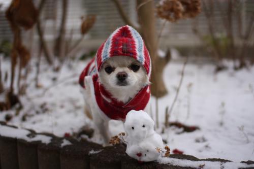 雪ダルマとツーショット