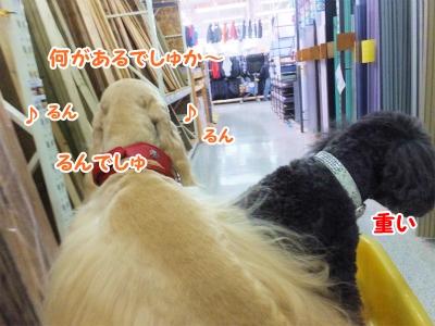 022_2014121422095258d.jpg