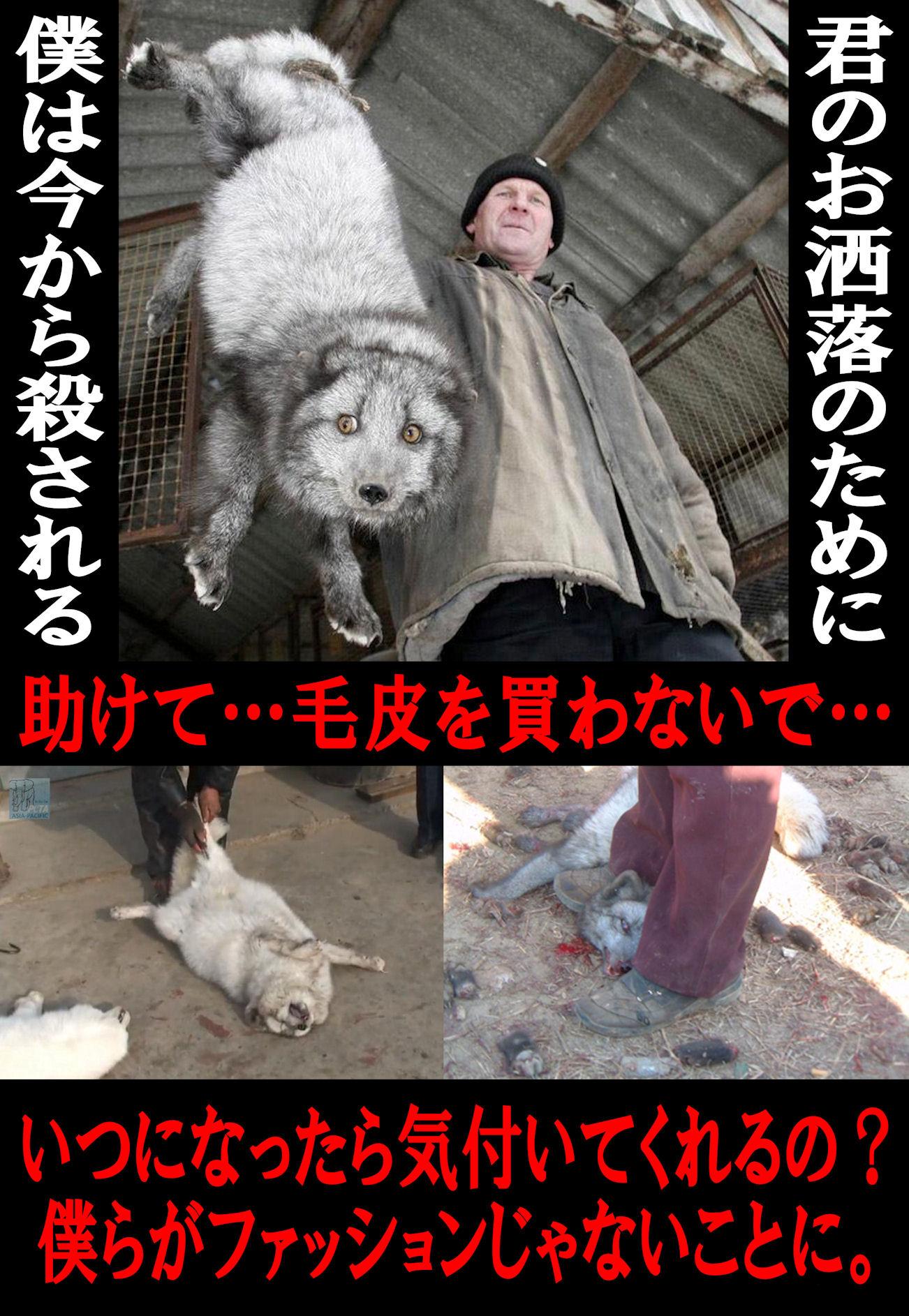 kegawa50a_20130811015719b1c.jpg