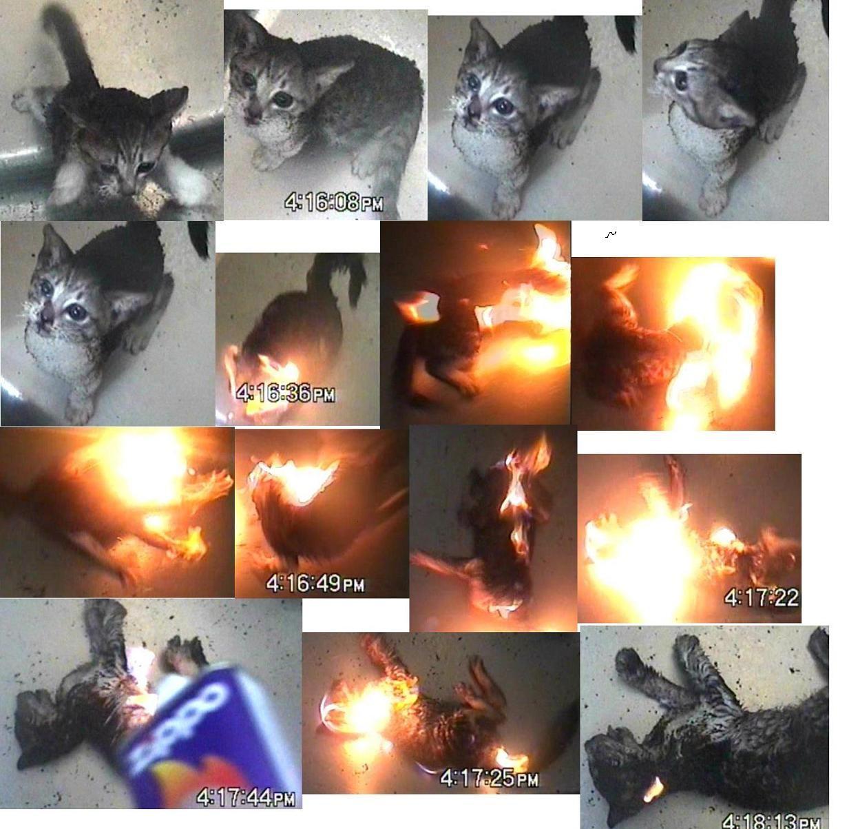 【淫乱】女神のオナニーが見たいpart40【女神】 [転載禁止]©bbspink.com->画像>235枚