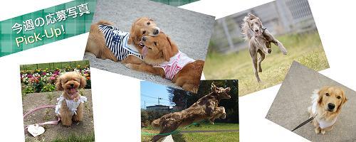 犬種別カレンダー
