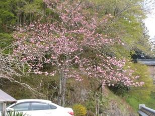 田舎の花1